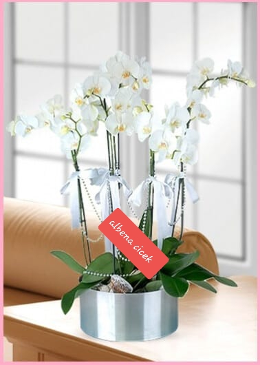 Beyaz kugu 5dal orkide çiçegi