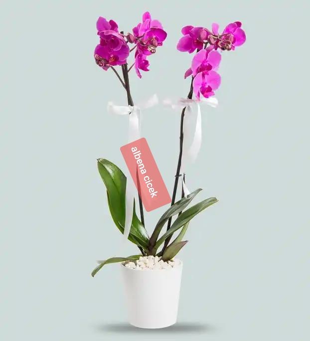 Zarif 2 dal mor orkide cicegi