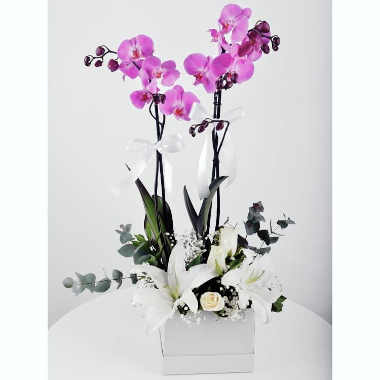 Herþey seninle güzel kutuda 2li mor orkide arajmani