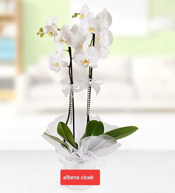 Beyaz kugu 2dal hediyelik paketli orkide çiçegi
