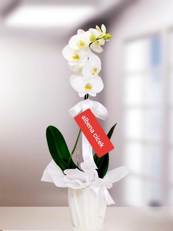 1dal hediyelik paketli orkide çiçegi