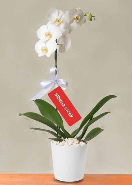 Beyaz bir sayfa  beyaz orkide çiçegi