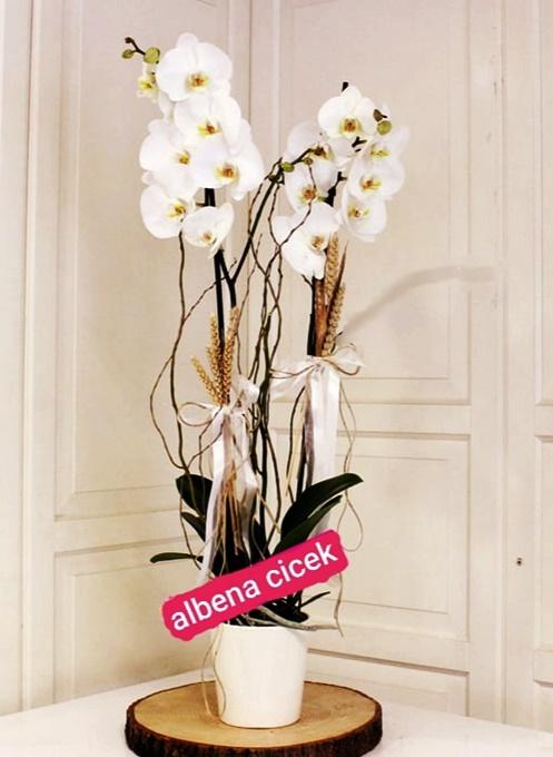 Beyaz 2dallý orkide çiçegi
