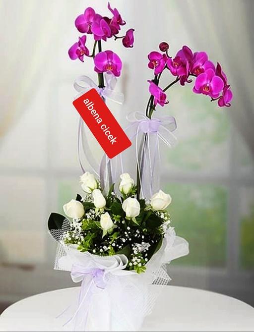 Zarif güzellik orkide gül arajmaný