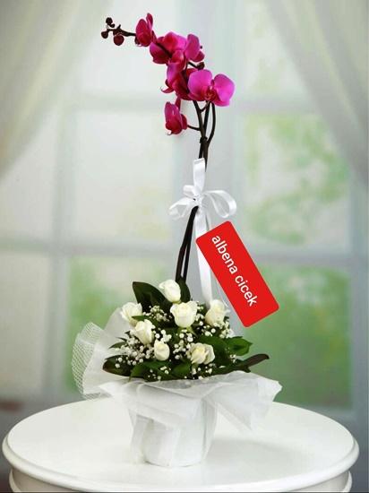 Birtek sen mor orkide beyaz gül arajmaný