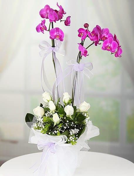 Masumiyet orkide gül arajmaný