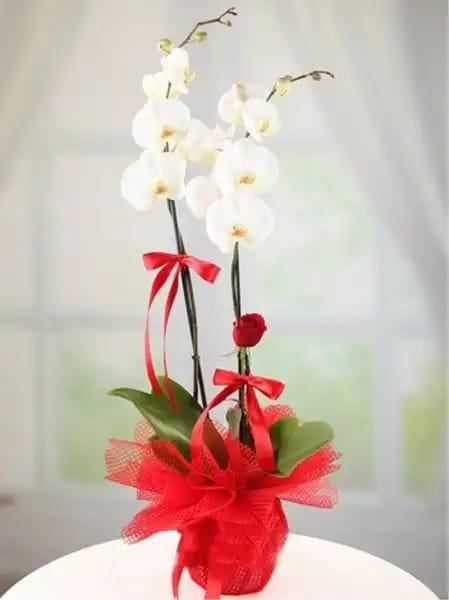 2dal kýrmýzý güllü beyaz orkide çiçegi