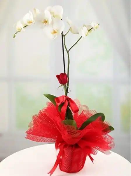 1dal beyaz orkide çiçegi