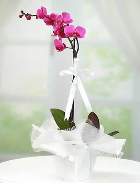 1dal mor orkide çiçegi
