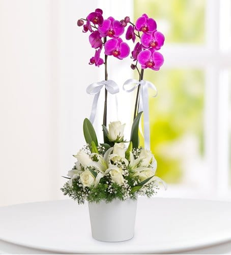 2li orkide lilyum gül arajmaný