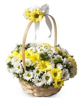 Renkli bahar çiçek sepetinde papatyalar