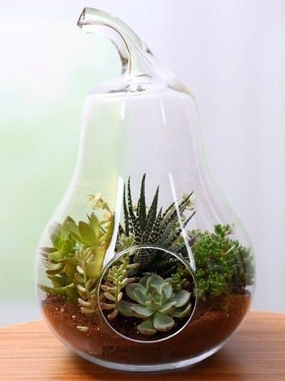 Armut camda tereryum sukulent bahçesi