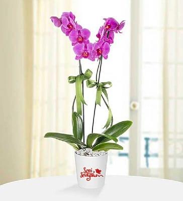 2dal seni seviyorum mesajlý mor orkide