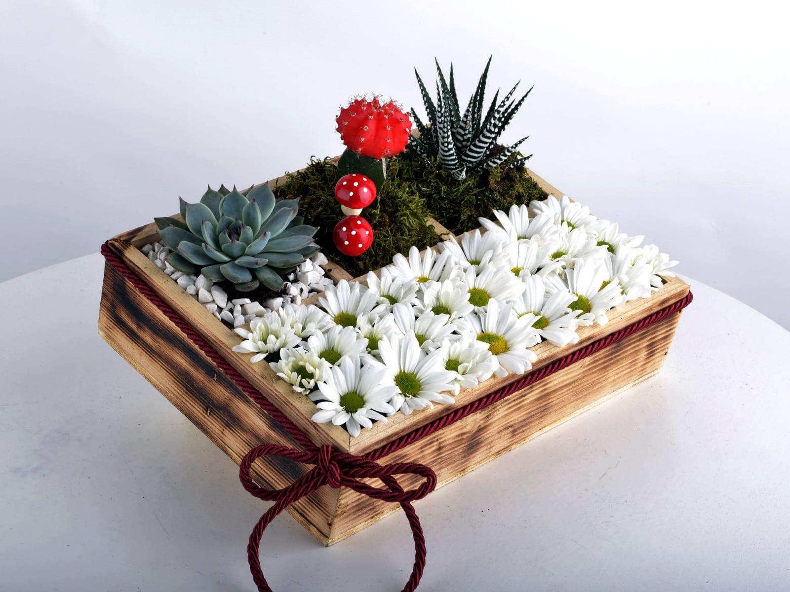 Bölmeli kutuda sukulent papatya arajmaný