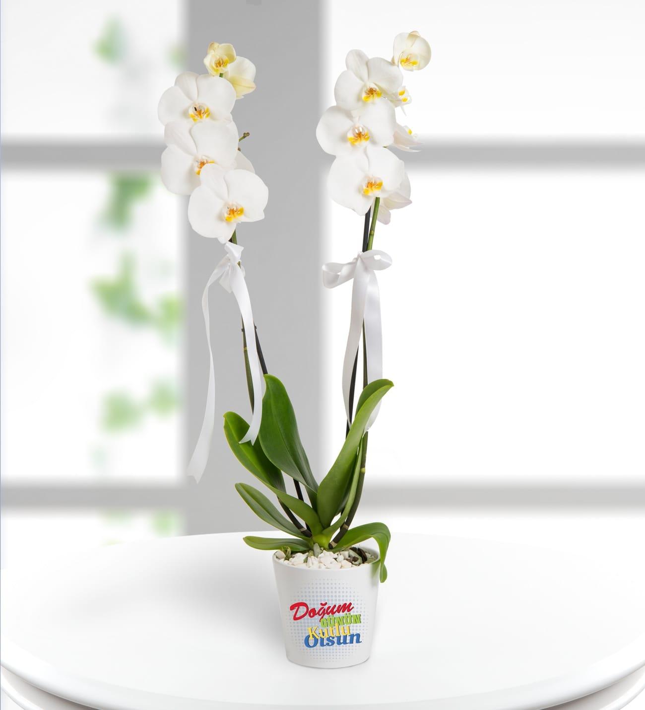 Dogumgünü mesajlý 2dal beyaz orkide