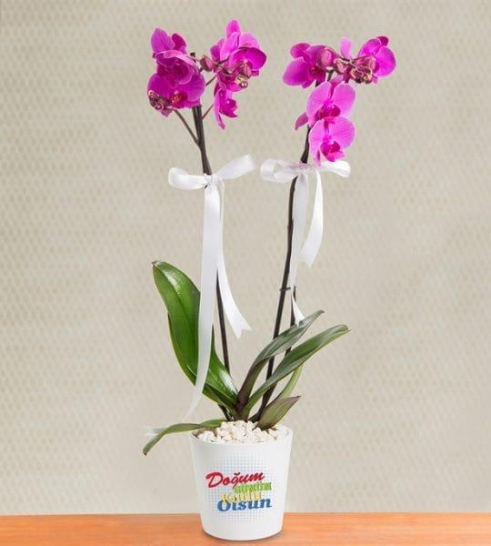 Dogum günü mesajlý 2dal mor orkide çiçegi