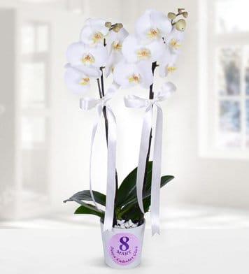 8 mart temalý 2dal beyaz orkide çiçegi