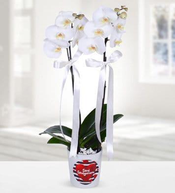Seni seviyorum temalý 2dal beyaz orkide çiçegi
