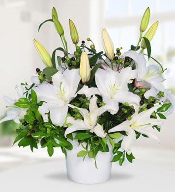 Kokulu lilyum zerafeti