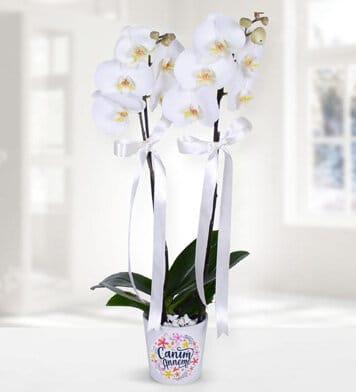 Caným anneme temalý 2dal beyaz orkide çiçegi