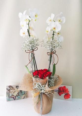 Beyaz 2li orkide kýrmýzý gül arajmaný
