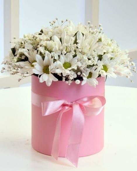 Pempe kutuda beyaz papatya çiçegi