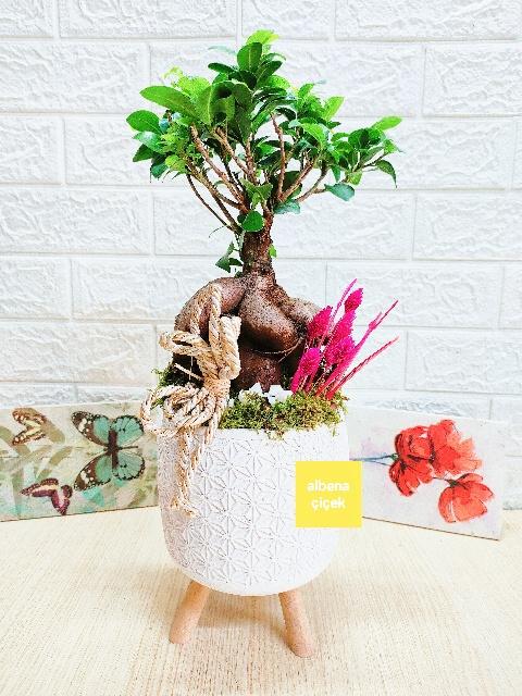 Ayaklý saksýda bonsai