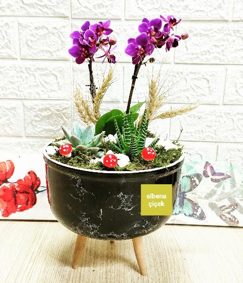 Mini orkide tasarým