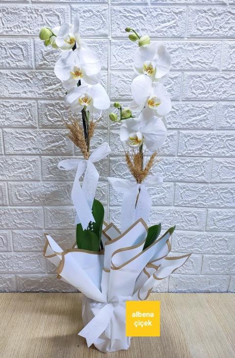 Beyaz 2li orkide çiçegi