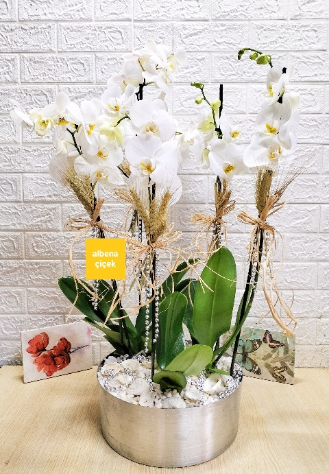 Kalvaniz saksýda 5 dal beyaz orkide