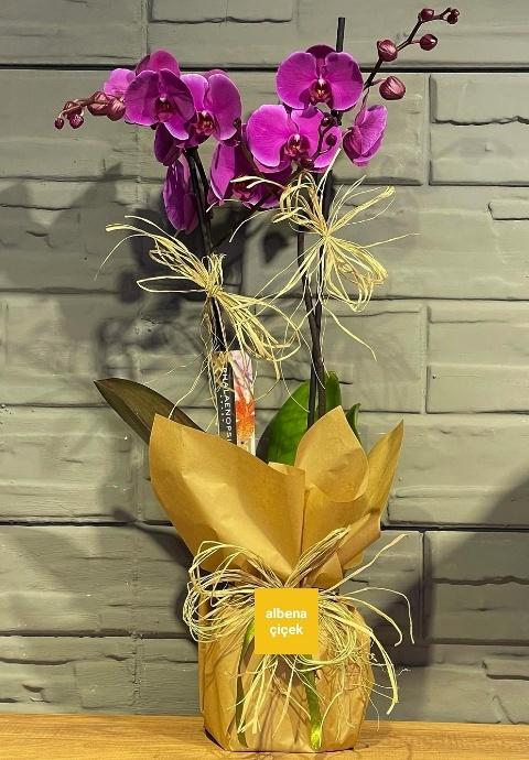 2li mor orkide çiçeði