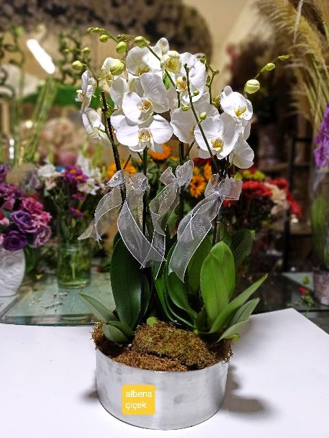 Aseletli beyaz 4 dal orkide