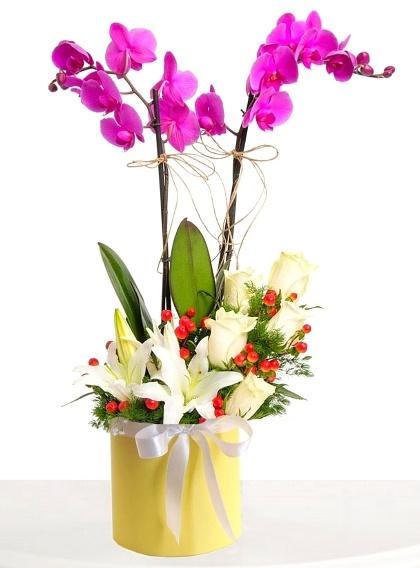 Kutuda 2li mor orkide arajmaný