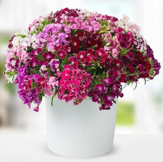 Seramikte renkli hüsnüyusuf çiçek arajmaný