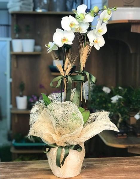 Güzel zarif 2li beyaz orkide çiçegi