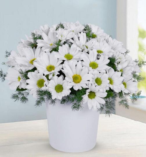 Seramik vazoda beyaz papatya  çiçek arajmanýý