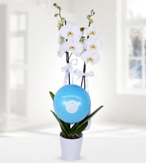 Erkek bebek mavi balon beyaz orkide