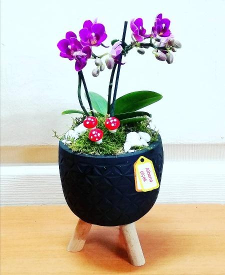 Ayaklý beton saksýda 2dal mini mor orkide çiçegi