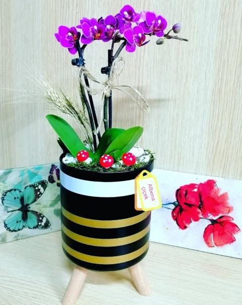 Ayaklý çizgili vazoda 2li mini mor orkide